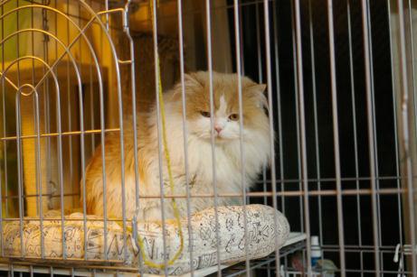 IMGP2950ー猫