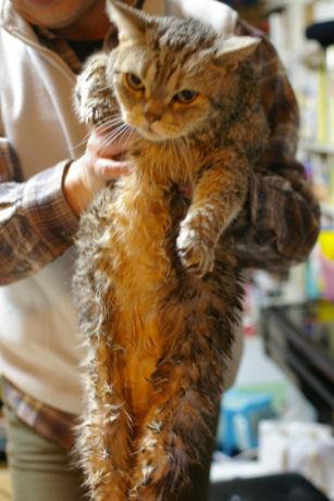 IMGP2967ー猫