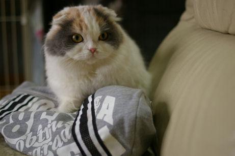 IMGP3141ー猫