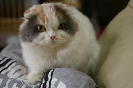 IMGP3145ー猫