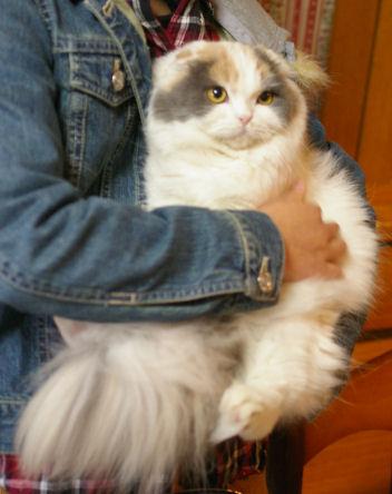 IMGP3151ー猫