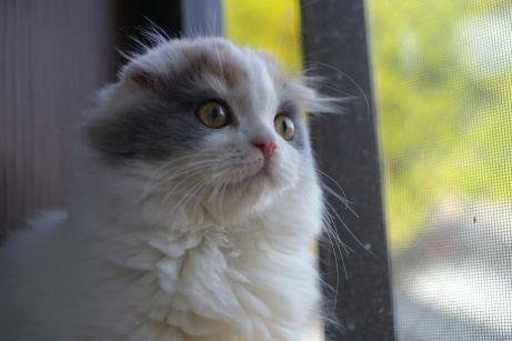 IMGP1625ー猫