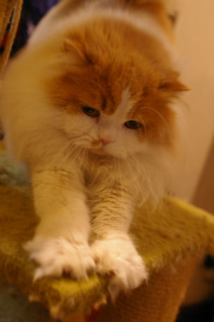 IMGP3167ー猫