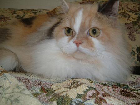 DSCF0201ー猫