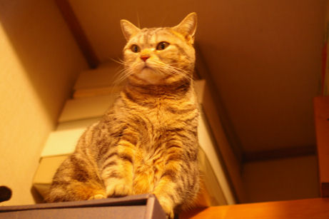 IMGP3225ー猫