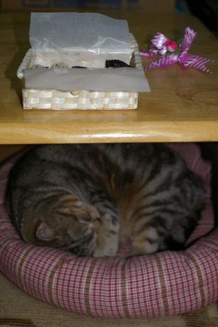 IMGP3259ー猫