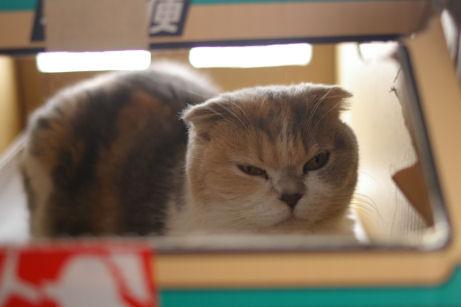 IMGP3294ー猫