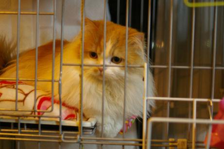 IMGP3301ー猫