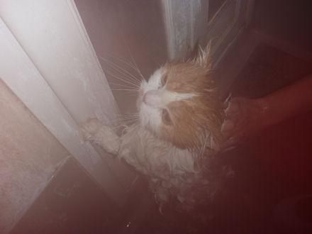 P1000121ー猫