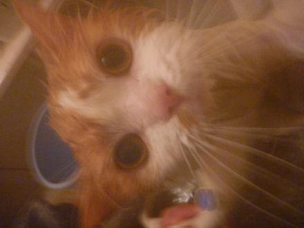 P1000146ー猫