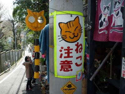P1000167ー猫