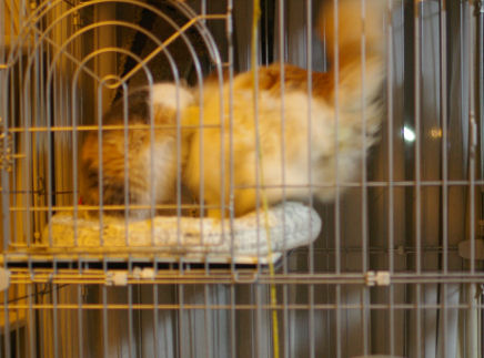IMGP3264ー猫