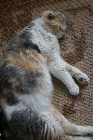 IMGP3346ー猫