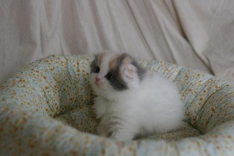 IMGP0241ー猫