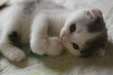 IMGP0467ー猫