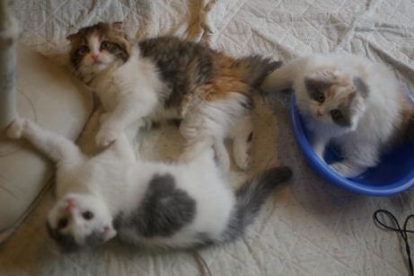 IMGP1046ー猫