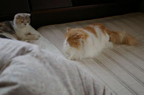 IMGP3389ー猫