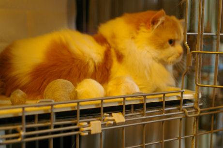 IMGP3561ー猫