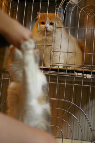 IMGP3579ー猫