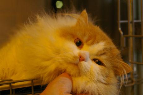 IMGP3551ー猫