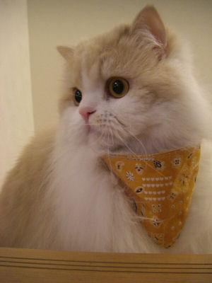 PICT0001ー猫