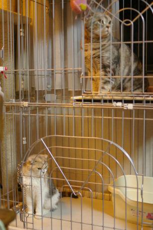 IMGP3603ー猫