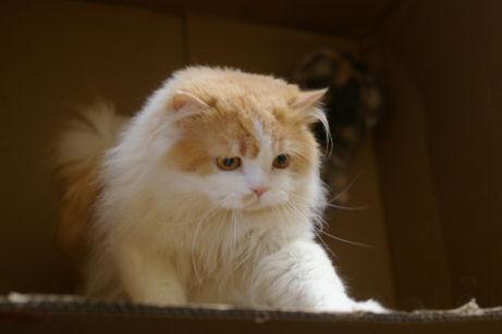 IMGP3622ー猫