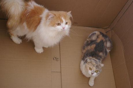 IMGP3621ー猫