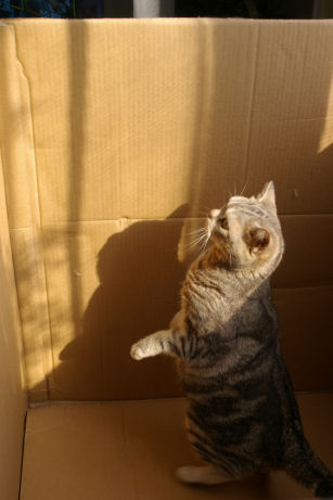 IMGP3638ー猫