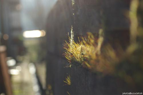 石塀の苔01