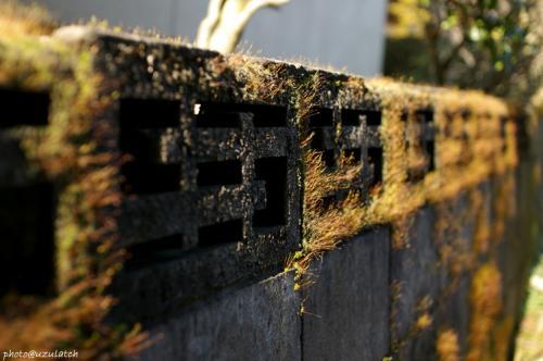 石塀の苔02