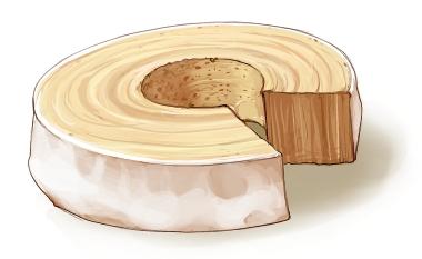 食:バウムクーヘン