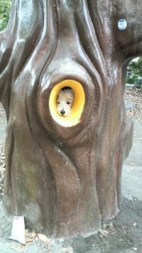 ・・木の中から