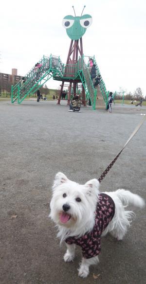 彩湖 公園