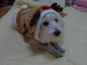 クリスマス 4