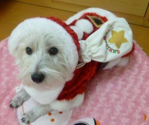 クリスマス 2010 2