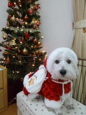 クリスマス 2010 4