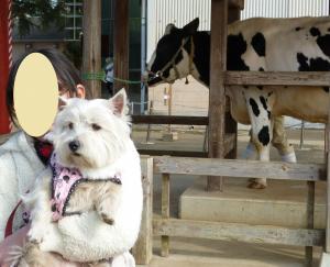 ゆめ牧場 牛と記念写真