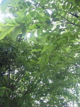 五月木漏れ日