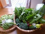 野菜-破竹