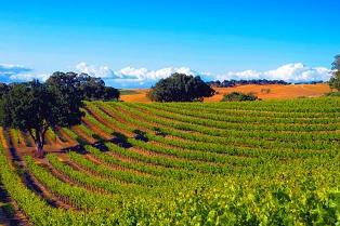 vineyard 314-209px