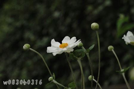 080918_1