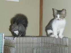ブログ用花ちゃんと子猫
