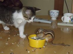 ブログ用ナッツと子猫