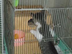 ブログ用子猫がりすカゴ1