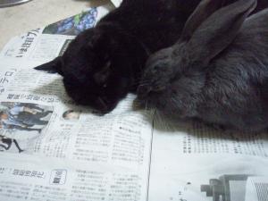 ブログ用メロ&黒お昼寝2