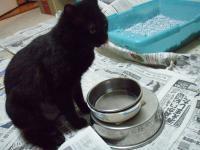 ブログ用猫の水飲み