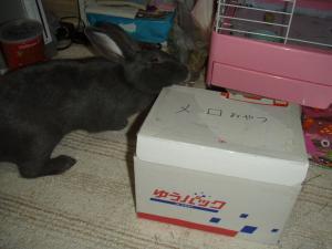 ブログ用メロのおやつ箱2