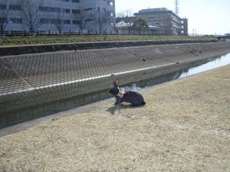 ブログ用メロうさんぽ5