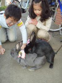 ブログ用メロ&ミミちゃん2